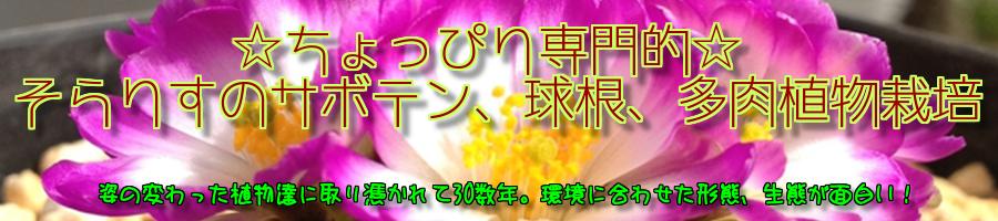 サボテン 球根 多肉植物 園芸 栽培 植物 趣味 自然 ガーデニング 花